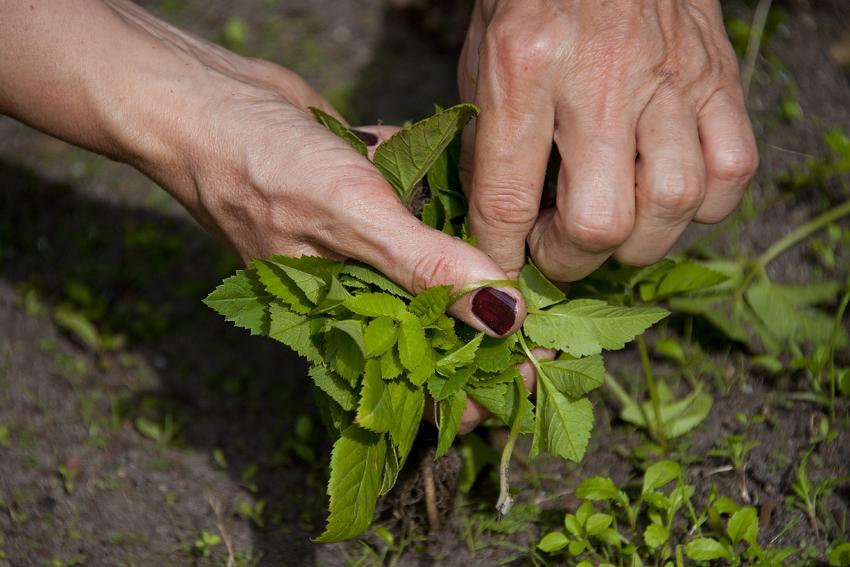 Foto van tuinierende handen van Hende Bauer tijdens workshop Mindful tuinieren.