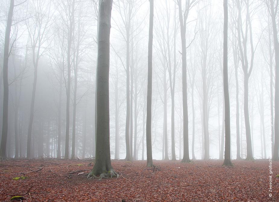 Foto van beukenbos in de mist, Saint-Hubert, Belgische Ardennen.