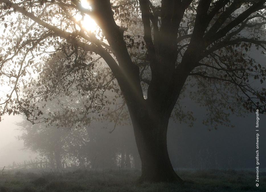 Foto van eikenboom in de herfstmist, Belgische Ardennen.