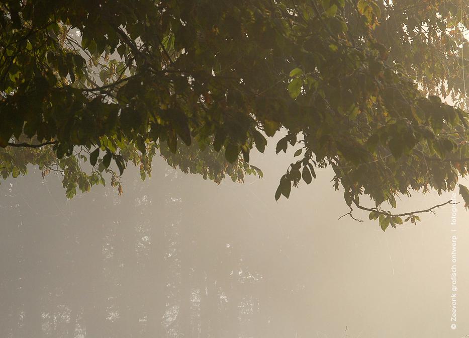 Foto van bomen in de herfstmist, omgeving Libramont, Belgische Ardennen.