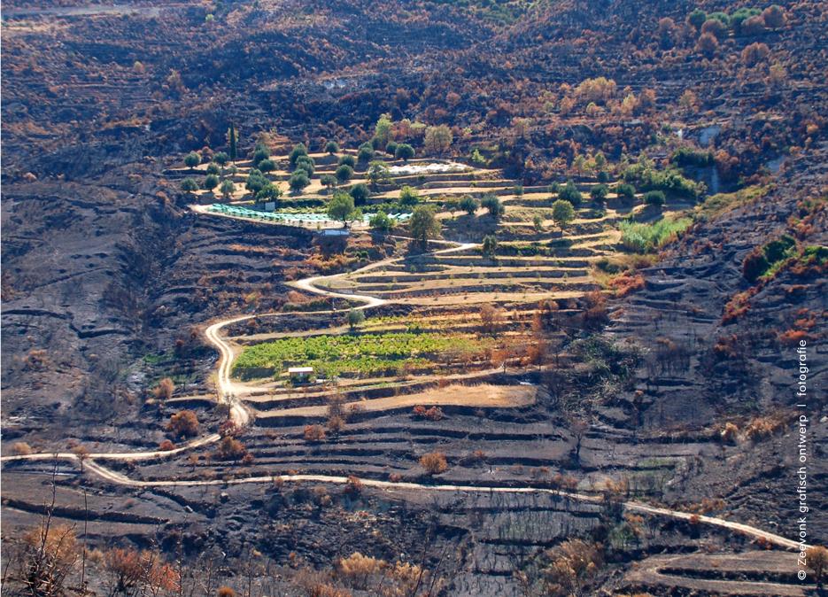 Foto van groene oase in zwartgeblakerde omgeving, Kefalonia, Griekenland.