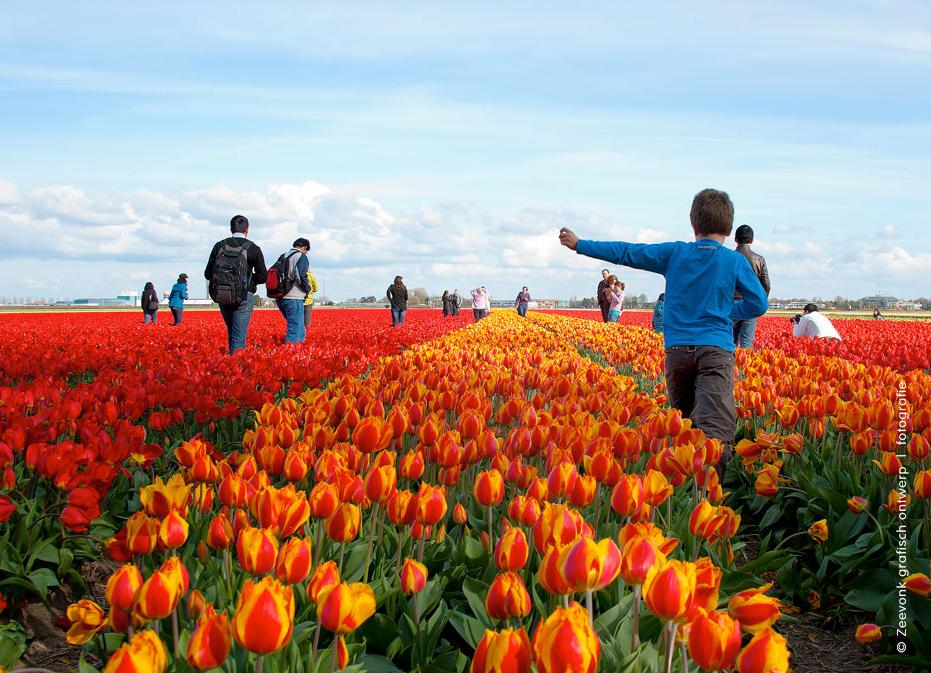 Foto van toeristen tussen de tulpenvelden van Lisse.