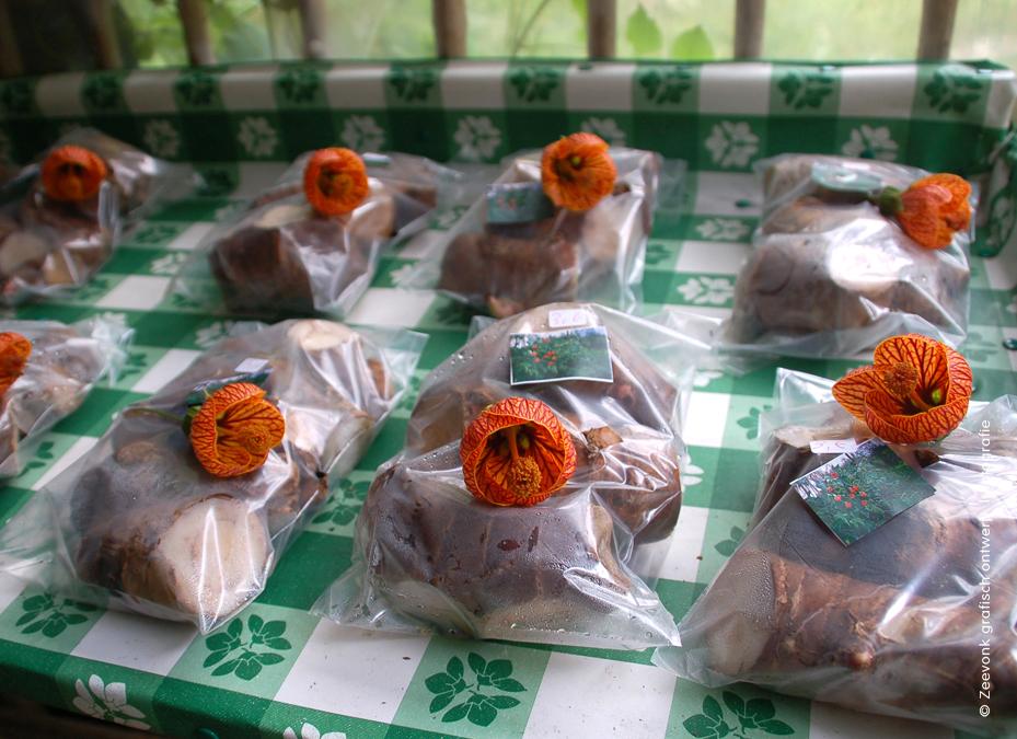 Foto van bloembollen in winkeltje op Madeira.