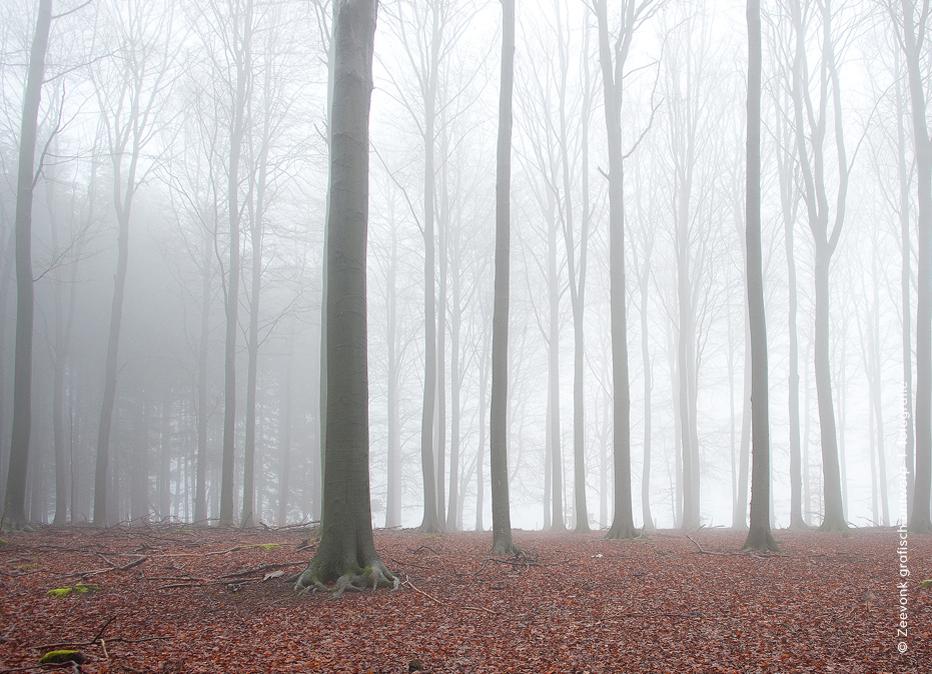 Foto van beukenbos in de wintermist, omgeving Saint-Hubert, Belgische Ardennen.