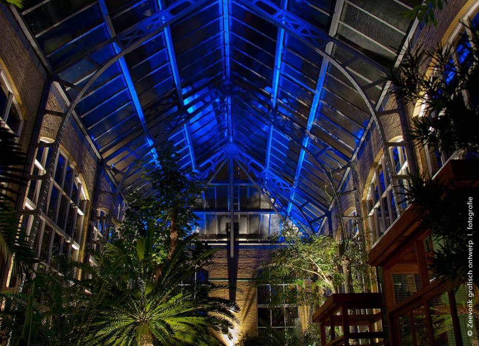 Foto van de sprookjesachtige verlichting van het plafond van de Hortus in Amsterdam.