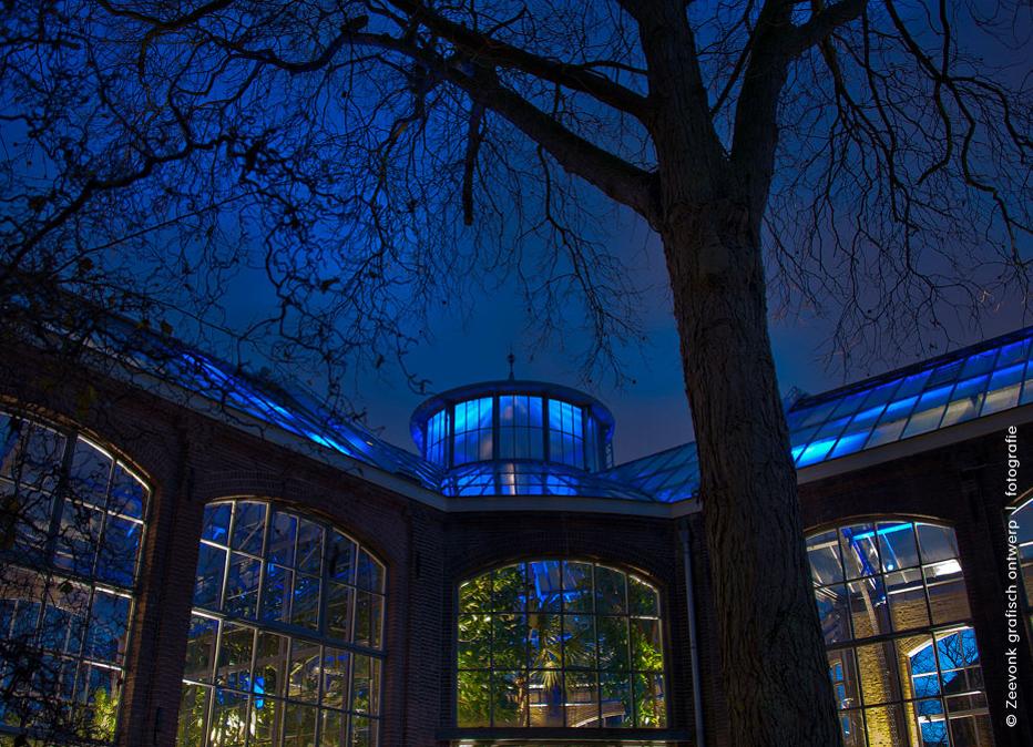 Foto van de sprookjesachtige binnenverlichting van de Hortus in Amsterdam.